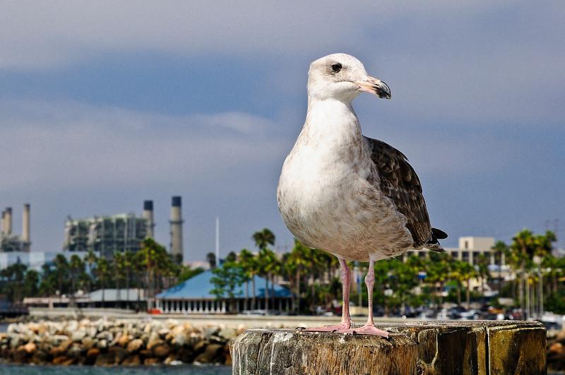 Redondo Beach Pier-11.jpg