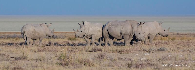 Four white rhinos with Etosha pan in background