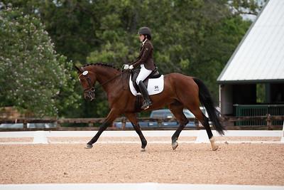 Horse 391