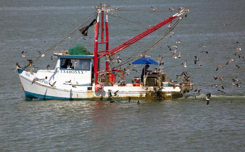 Gulls, Cormorants, and Pelicans swarm a returning shrimpboat.