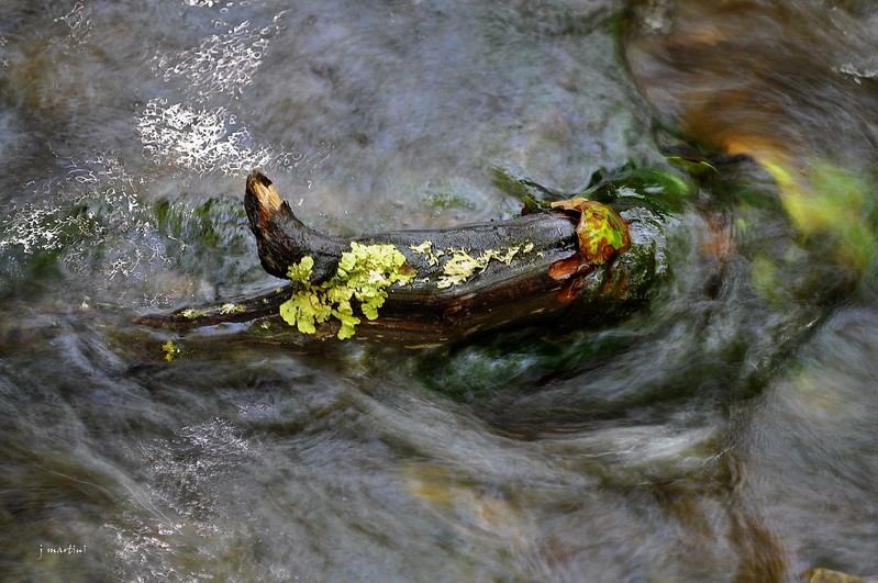 soggy 6-4-2012.psd