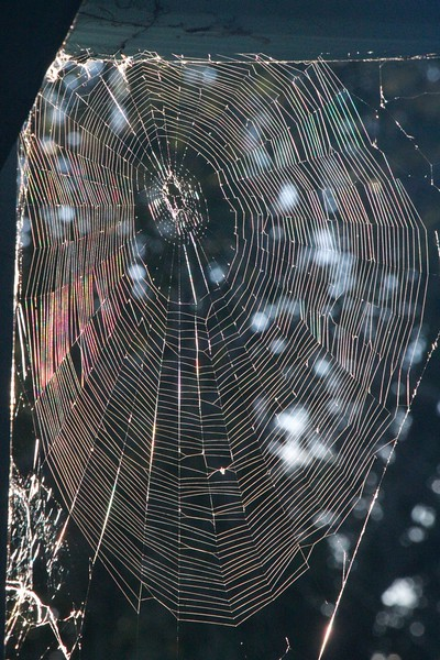 Spiderweb in early morning light