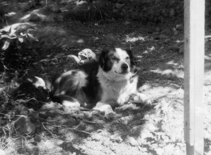 Laddie1948.jpg