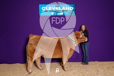 Cleveland County Livestock Show