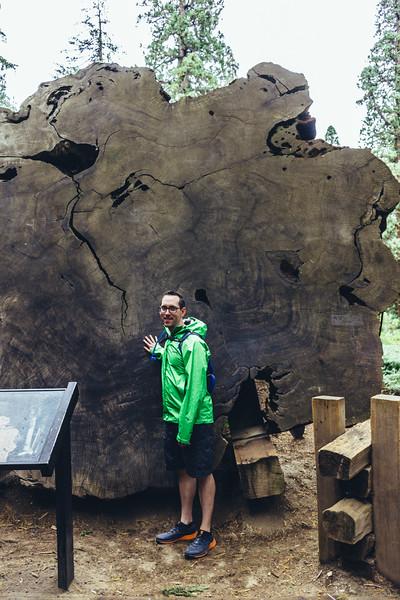 Rui in Sequoia-07012.jpg
