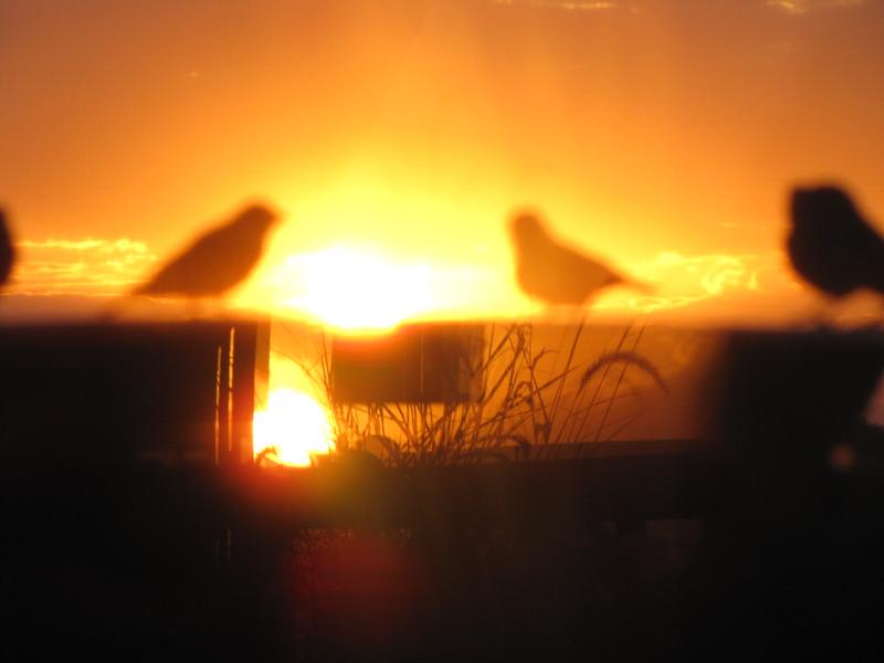 birds (146).jpg