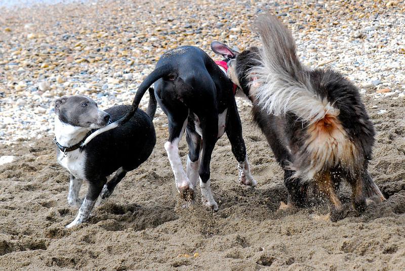 dogs_beach-030.jpg