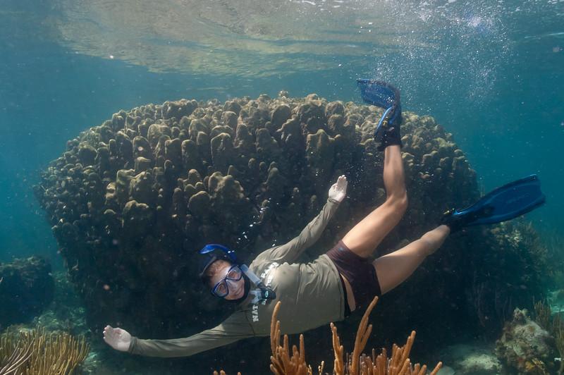 Huge coral head