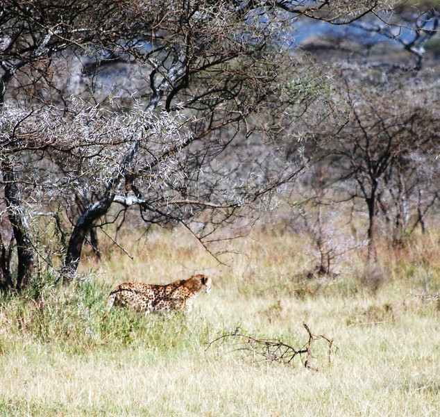 Serengeti (148).JPG