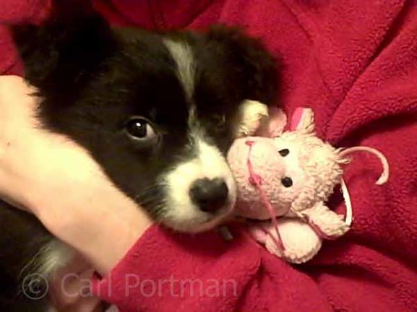 puppy darwin 2010.jpg