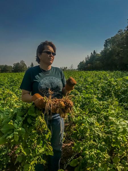 prince edward island potato farmer.jpg