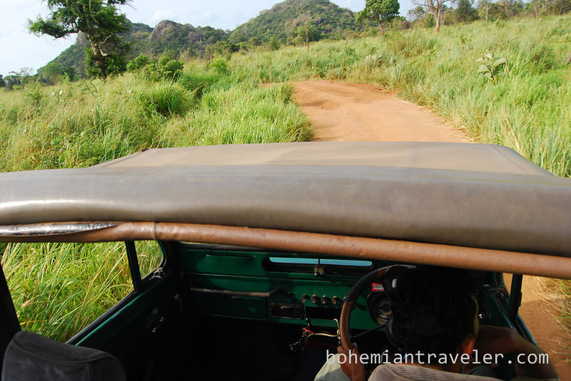 view from jeep roof in Habarana Eco Park.jpg