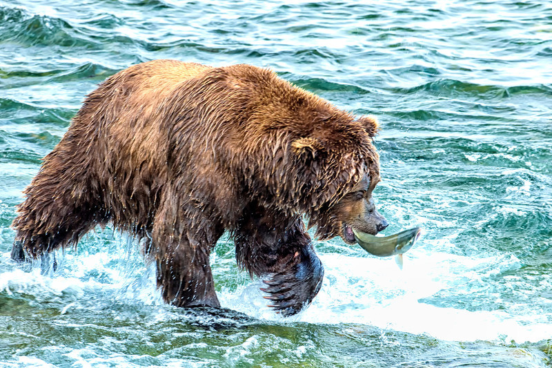 Alaska_2013_FH0T7902.jpg