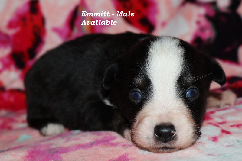 Emmit has been reserved as of 3/4./18