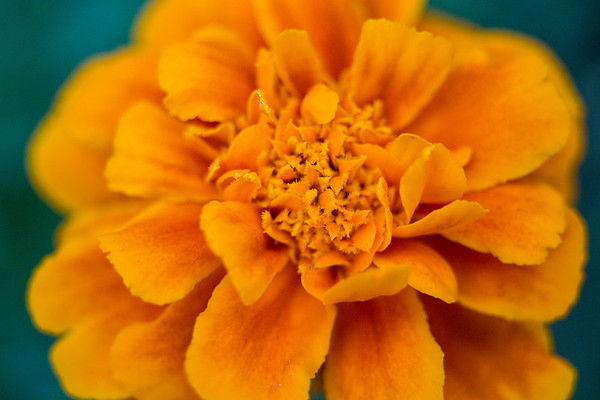 Flowers - 08/07/17
