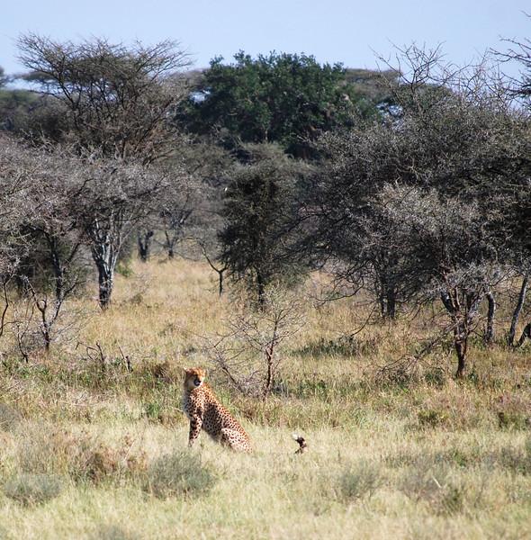 Serengeti (137).JPG