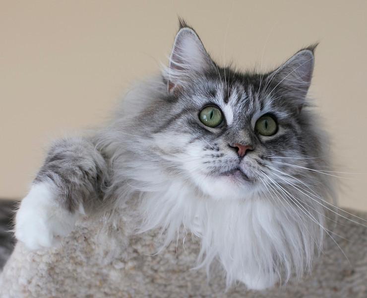 Kittens303.jpg