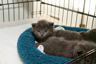 Adopted: The Goode Family Kittens