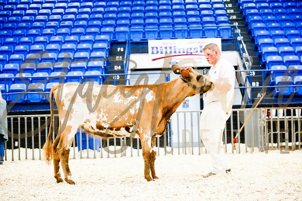 Ring: Dairy