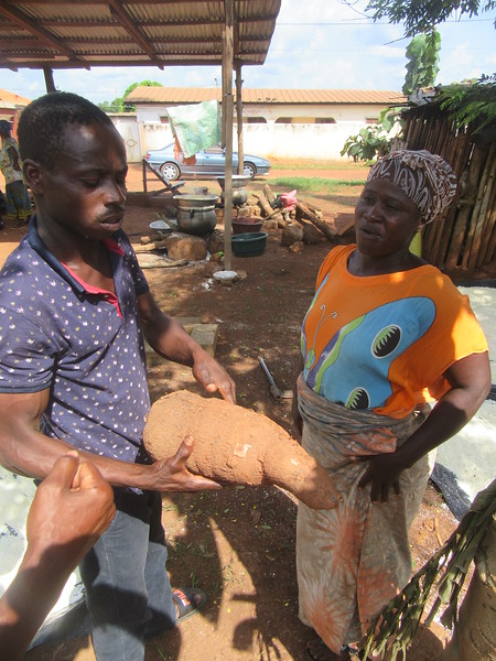 041_Aniassué. Semoule de manioc (Attieké). 1 de 7. Le tubercule.JPG