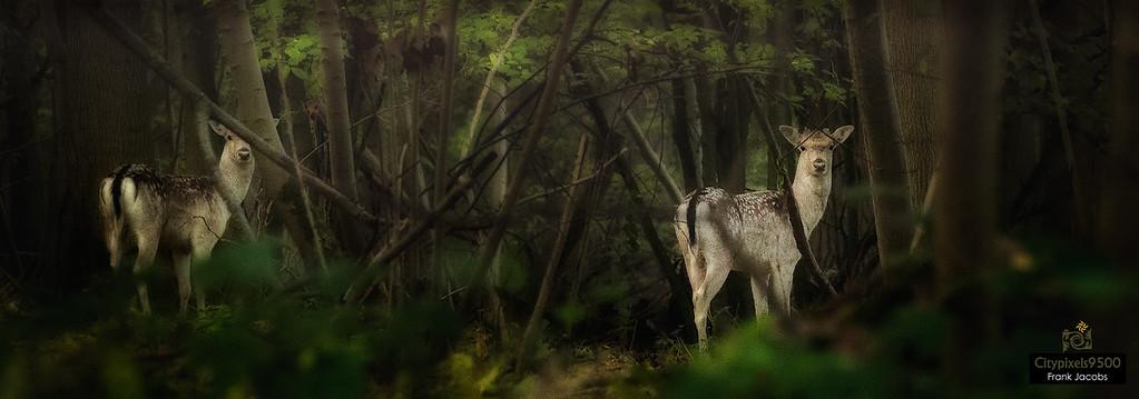Bosberg – Wild in het Raspaillebos
