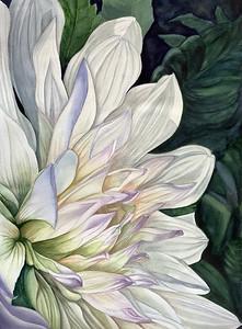 Brilliant White Dahlia