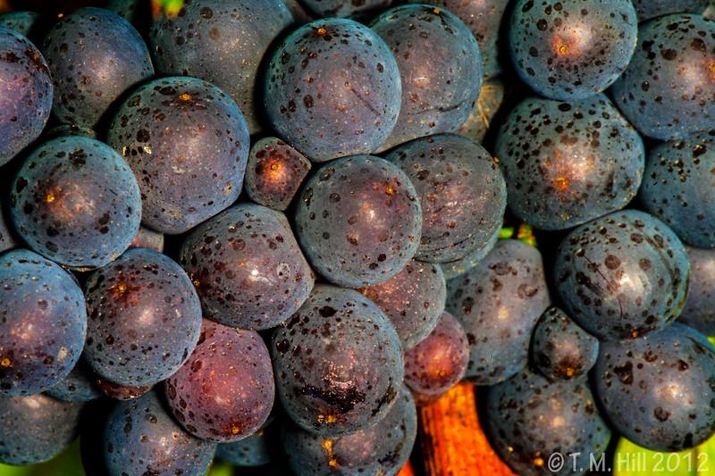The Vineyard in Summer 2013