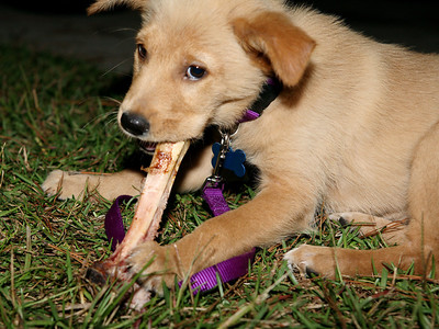 Kami Bean's 1st Bone October 16, 2008