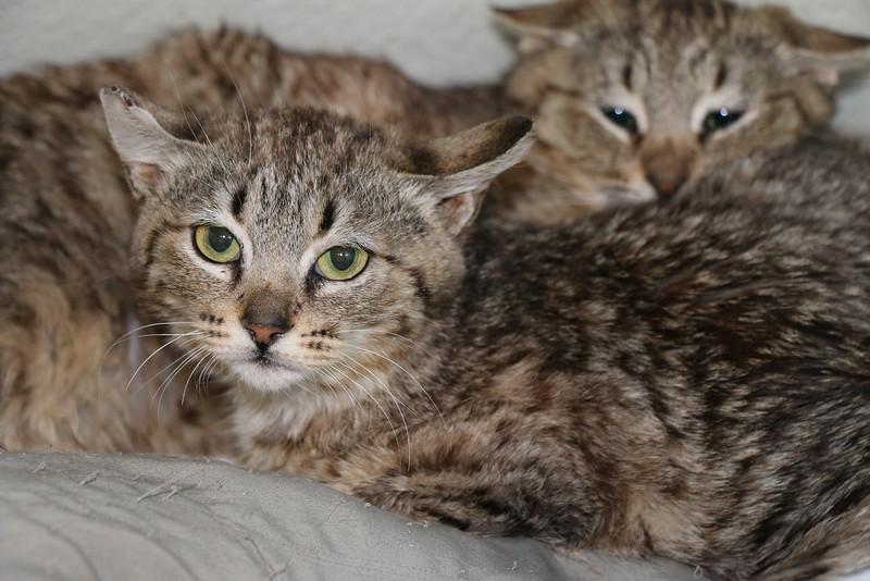 Feral kittens - 0323015 - 3.JPG