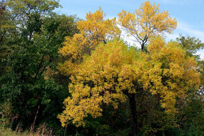 clip-015-tree_autumn-wdsm-20sep12-8316.jpg