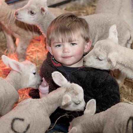 Lambing at Lower Wilbury Farm