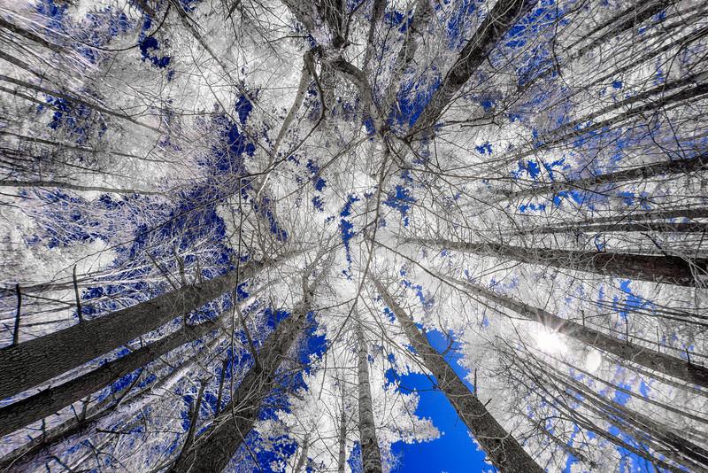 Falling up BLUE.jpg