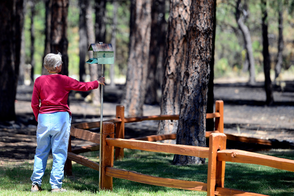 . BLACK FOREST, CO - JUNE 19: Vaneal Burgess touches a birdhouse that was among the few items not burned at her home that was destroyed by the Black Forest Fire on Shoup Road. Burgess, and her husband, Don, owned the home for 35 years, raised their children and entertained their 13 grandchildren. Their daughter also lost her home to the Black Forest Fire near Herring Road. (Photo by AAron Ontiveroz/The Denver Post)