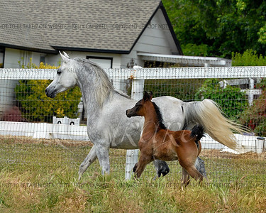Koda and Colt