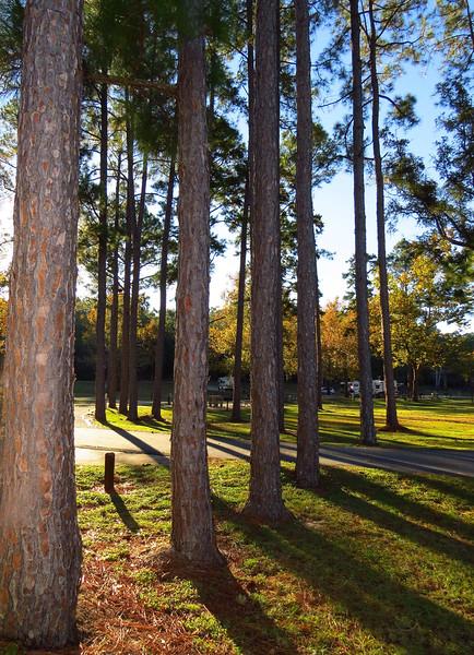 Lake Seminole COE, Eastbank Campground, Georgia (18).JPG