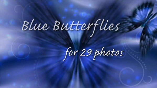 Blue Butterflies for 29 photos