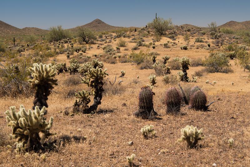 Apache Wash trail of the Phoenix Sonoran Preserve