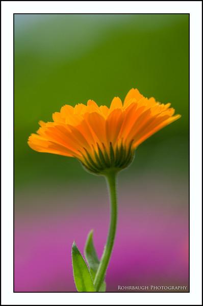 Rohrbaugh Photography Flowers 110.jpg