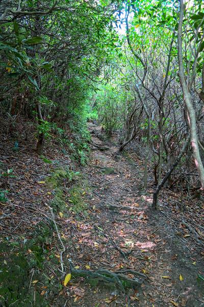 Mountains-to-Sea Trail -- 4,880'