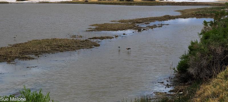 05-19-2021 Summer Lake Wildlife Refuge-52.jpg
