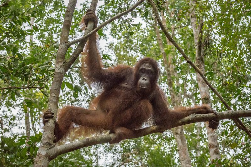 Borneo-2330.jpg