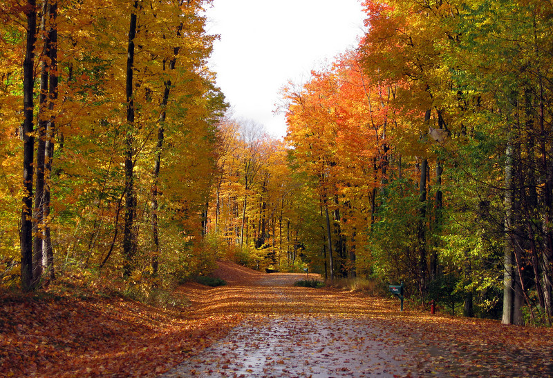 Fall foliage on the road in front of our home