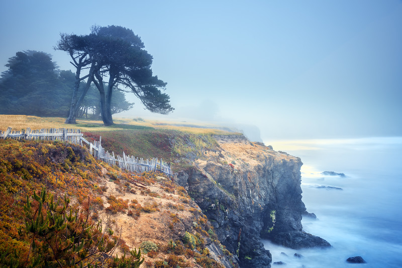 Bluff Cypress in Fog, Sea Ranch, California
