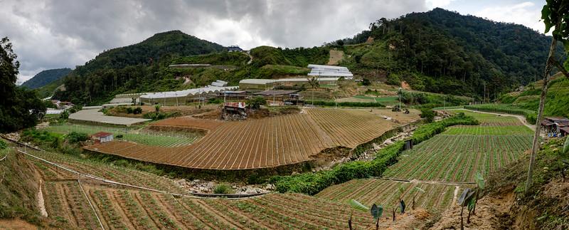 Tanah Rata, Malaisie