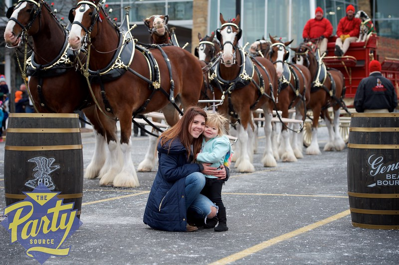 Clydesdale Portraits 39.jpg