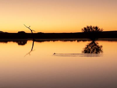 Bosque del Apache Sunrises_Mornings