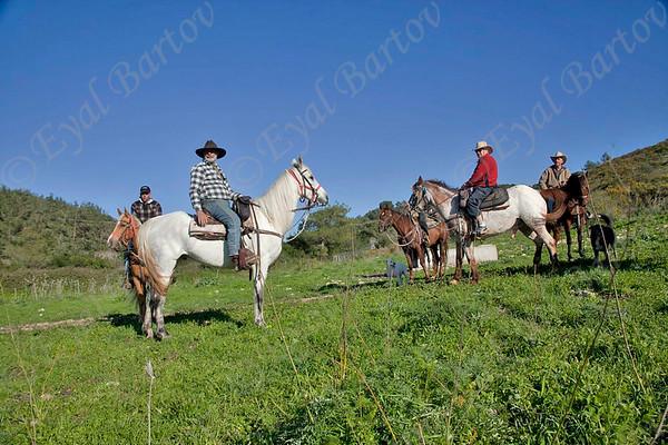 טיולי סוסים ורוכבים