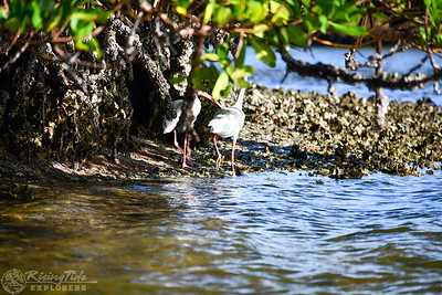 9AM Heart of Rookery Bay Kayak Tour - McDowell, Scarbrough & Ding