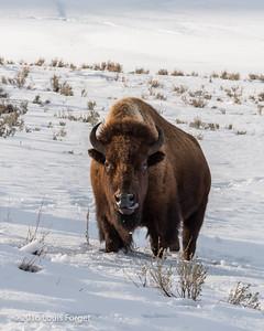 Yellowstone (2016)