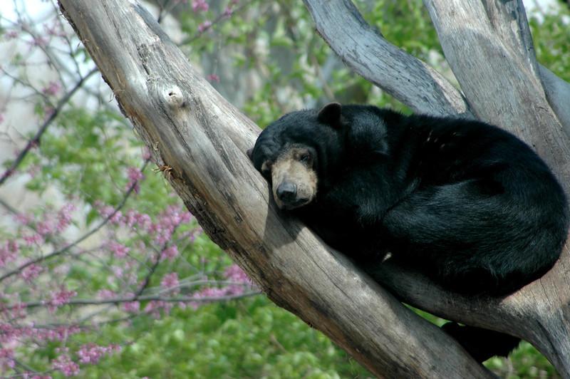 Bearable sleep time  .jpg